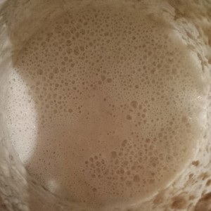 Frothy Sourdough starter ready to use